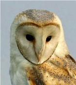 b-owl-head